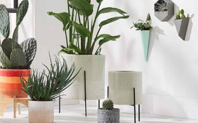 6 Fun, Modern, and Trending Indoor Planter Ideas