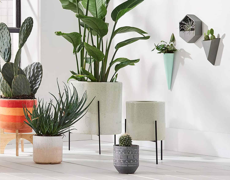 6 Fun, Modern, and Trending Indoor Planter Ideas