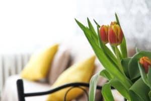 spring tuilips next to bright window yellow pillows