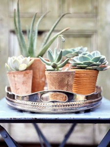 Elegant rustic outdoor tray