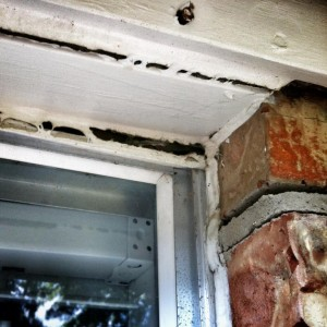 Broken window caulking allows insects to enter