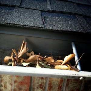 Gutter full of leaves provides breeding material for insects
